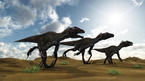 Dino Fun Facts The Dinosaur Museum