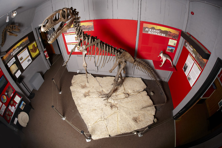 How did Dinosaurs stand on 2 feet?