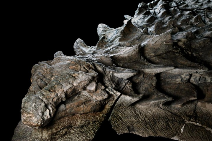 New Dinosaur fossil discovered that is so well preserved it could be a statue!