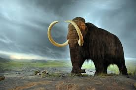 The Resurrection of the Woolly Mammoth